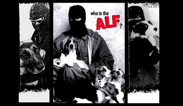 Warsztat: Animal Liberation Front – kim jest ALF? [WARSZAWA]