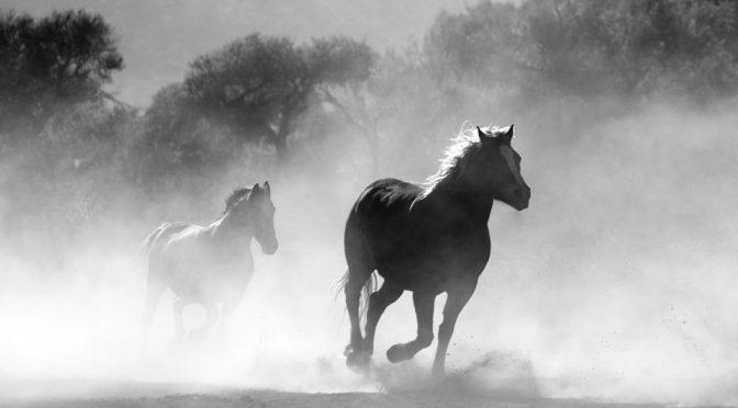 Rząd stanów zjednoczonych opublikował plan odstrzału i uboju 100 tysięcy dzikich koni i osłów [USA]