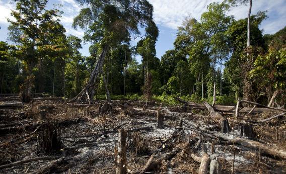W 2017 r. zabito 197 obrońców przyrody i zasobów