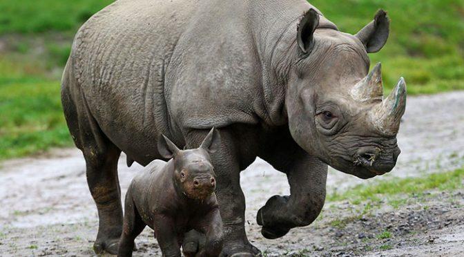 Kaziranga: park, który w obronie nosorożców strzela do ludzi [INDIE]