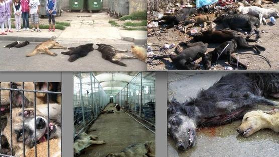 Krwawy mundial w rosji, czyli o tym, jaką rzeź na bezdomnych zwierzętach urządzają władze [ROSJA]