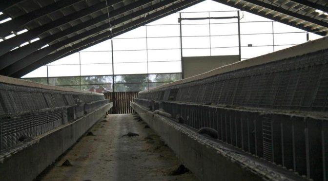 Zamknięto farmę futrzarską po kilkukrotnym zaatakowaniu jej przez ALF [SZWECJA]